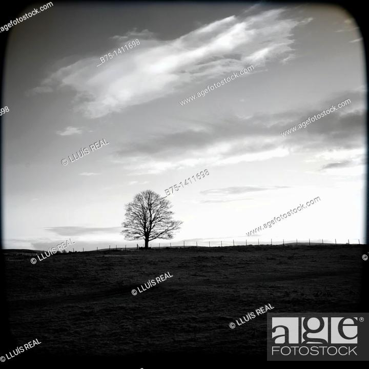 Stock Photo: Silhouette of lone tree.