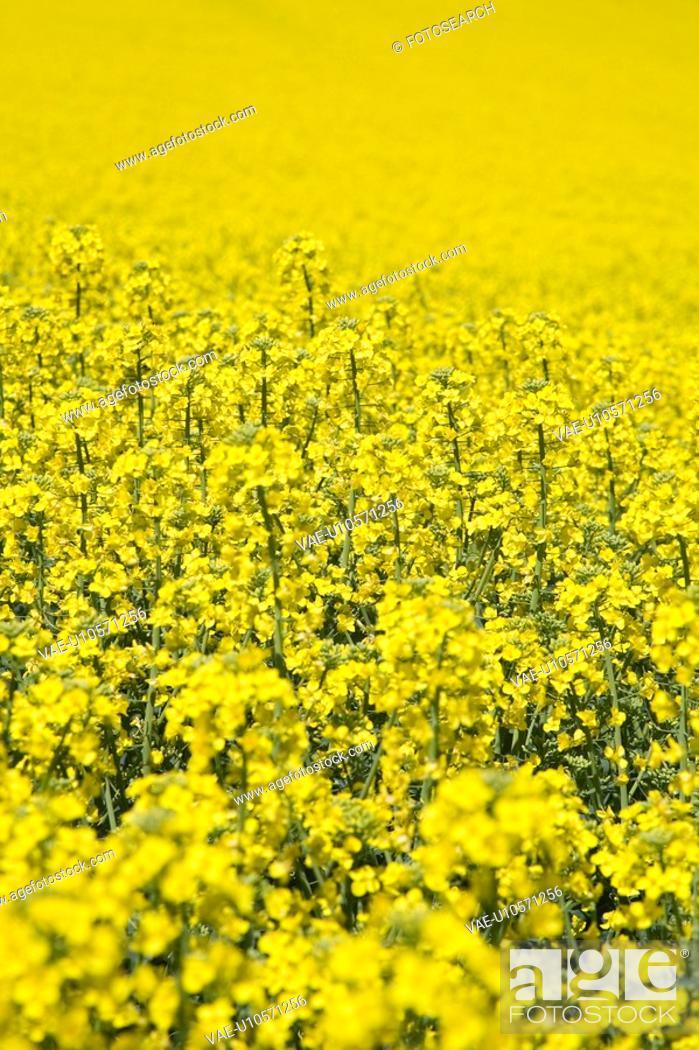 Stock Photo: felder, alternativenergie, acre, agriculture, agroindustry, alfred.