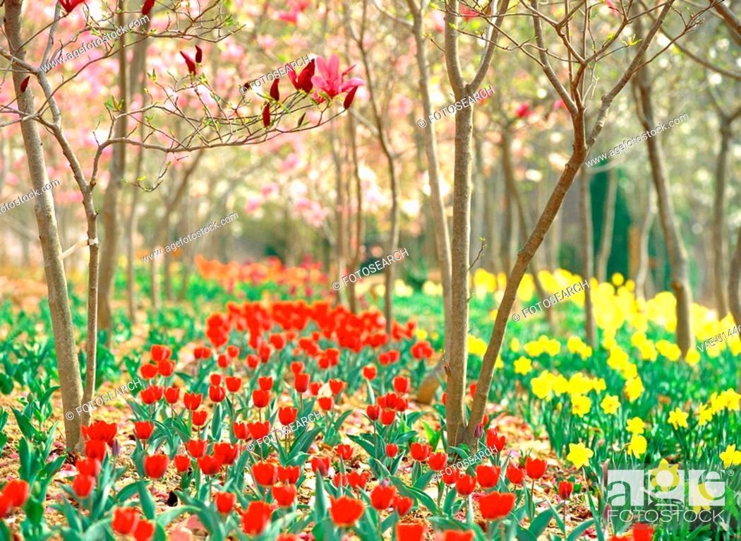 Stock Photo: plants, plant, park, tulip, flower, film.