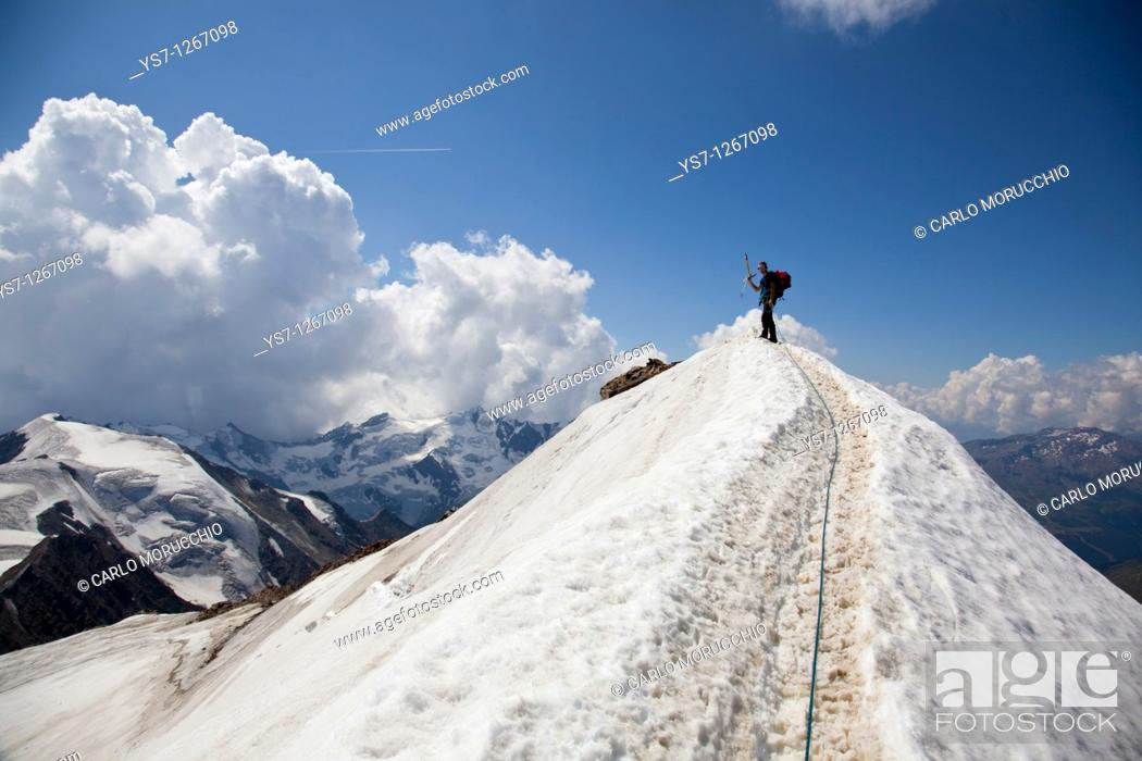 Stock Photo: Reaching the summit of Mount Cevedale, 3769 m, Alps, Lombardy, Trentino Alto Adige, Italy.
