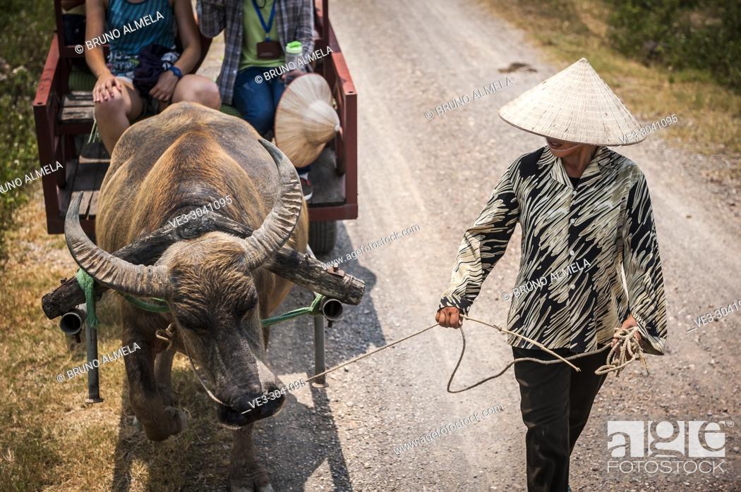 Stock Photo: Asian water buffalo pulling Cart tour in Dong Tam (Ninh Binh province, Vietnam).
