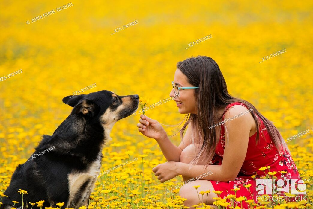 Stock Photo: Girl with a red dress offering flowers to a dog in a yellow field.