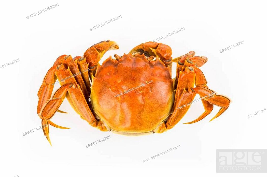 Stock Photo: cooked crab closeup.