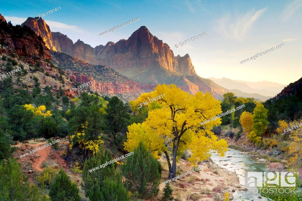 Stock Photo: The Watchman over Cottonwood tree in fall along the Virgin River, Zion National Park, Utah.