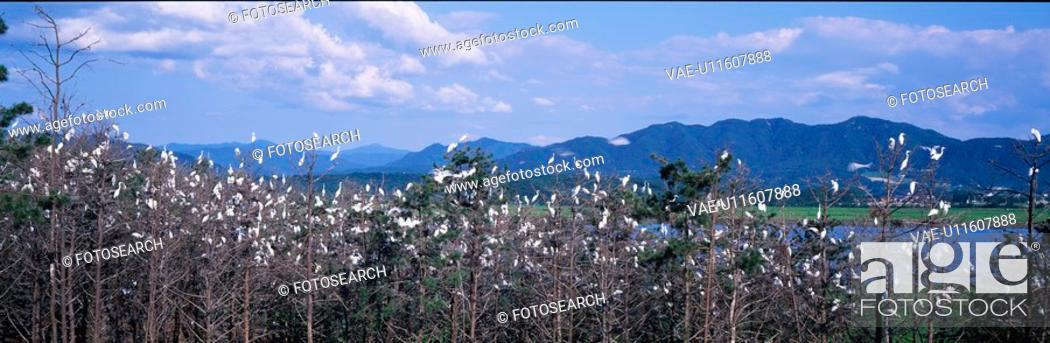 Stock Photo: mountain, panorama, scene, nature, landscape, field, panoramic view.