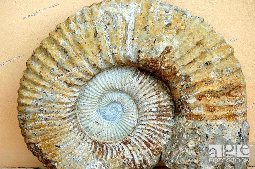 Stock Photo: Stony Snail-Shell.