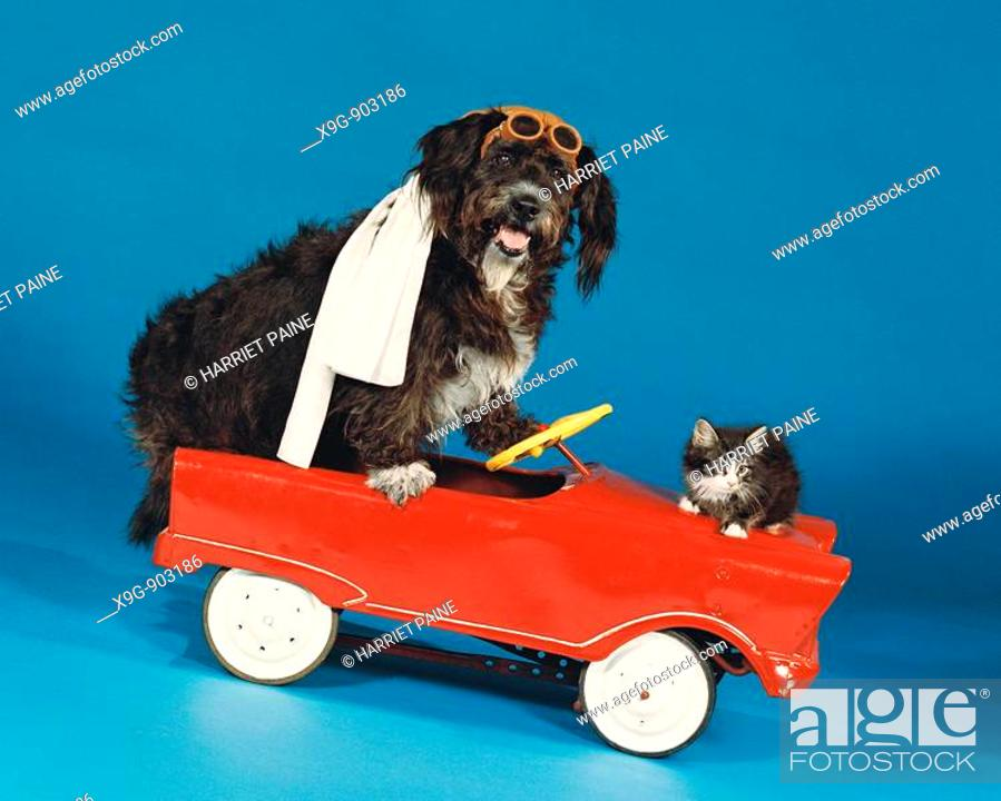 Stock Photo: Dog and cat in toy car.