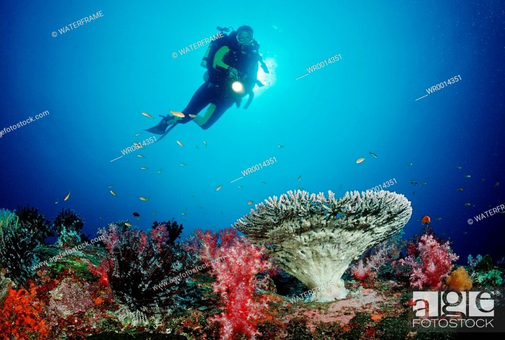 Imagen: Coral Reef and Diver, Similan Islands, Thailand.