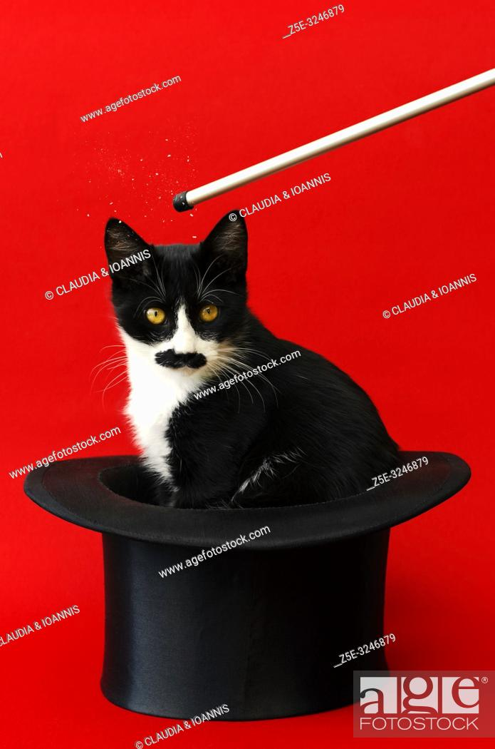 Photo de stock: Black and white kitten sitting in a tophat and looking at camera.