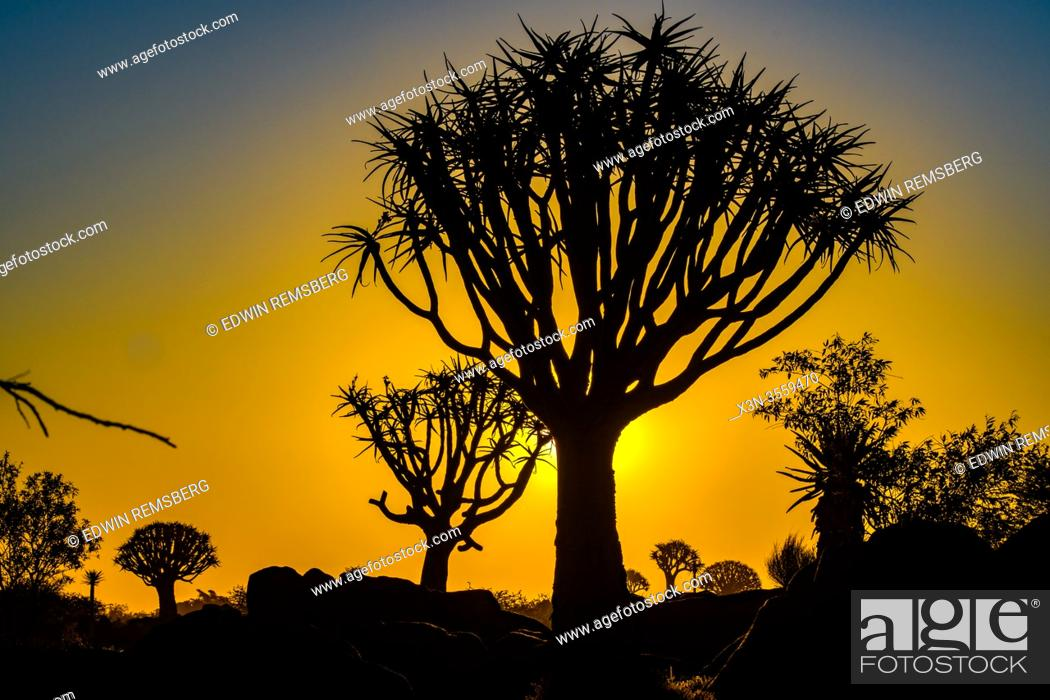 Stock Photo: Sunsets behind Quiver Trees at the Quiver Tree Forest - Keetmanshoop Namibia.