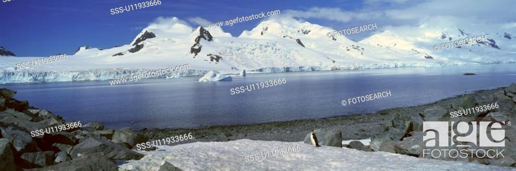Stock Photo: Panoramic view of Chinstrap penguin among rock formations.