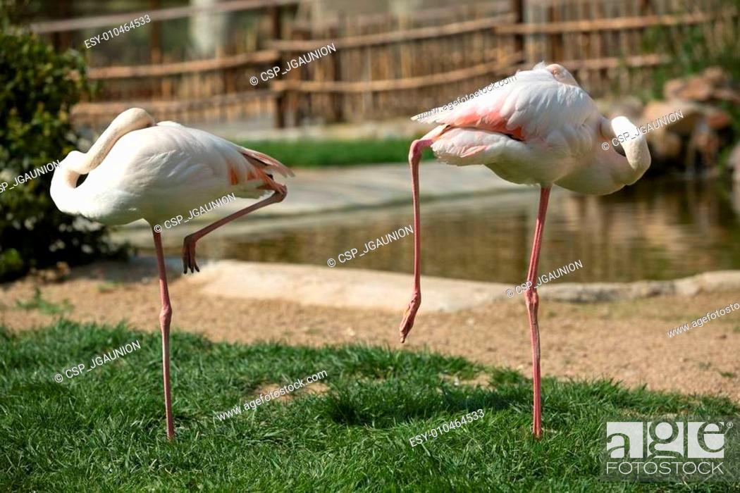 Stock Photo: Flamingos on the grass.