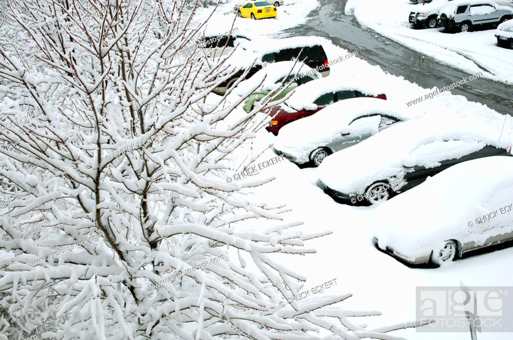 Stock Photo: Heavy sticky snowfall on tree branches after winter storm.