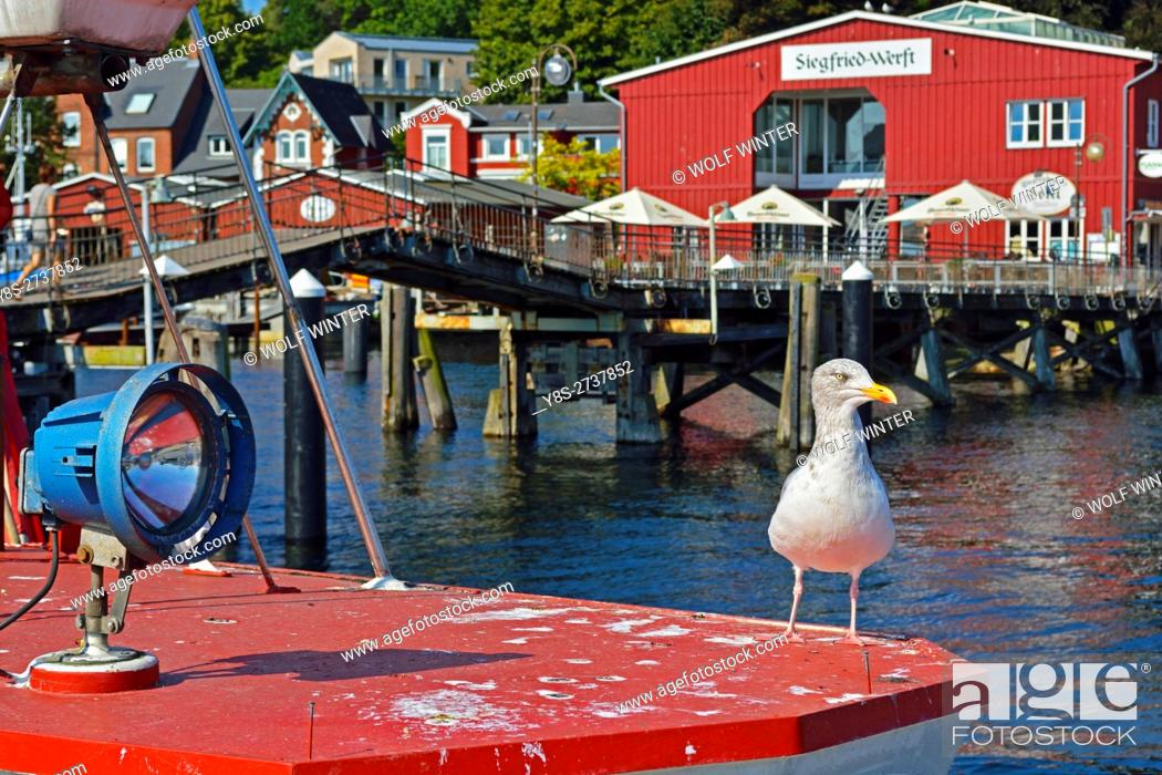 Stock Photo: Seagull(s) at the port of Eckernfoerde, Schleswig-Holstein, Germany.