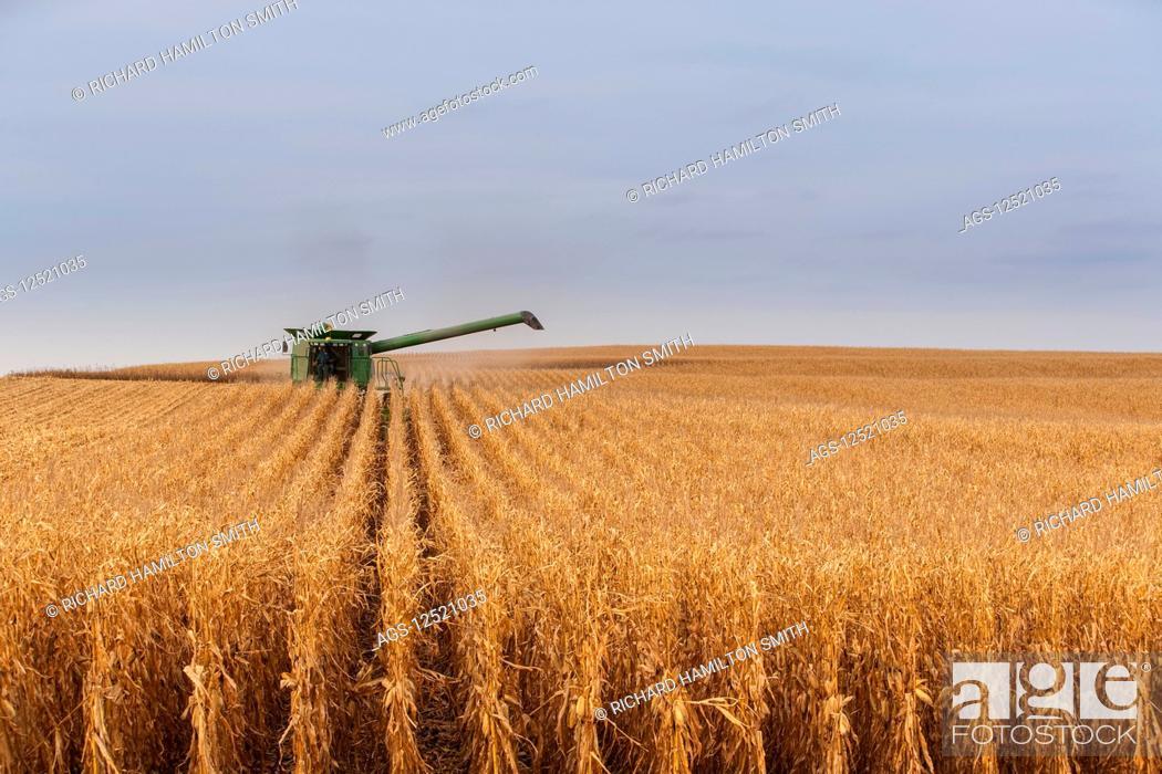Stock Photo: Combine picking corn during corn harvest, near Nerstrand; Minnesota, United States of America.