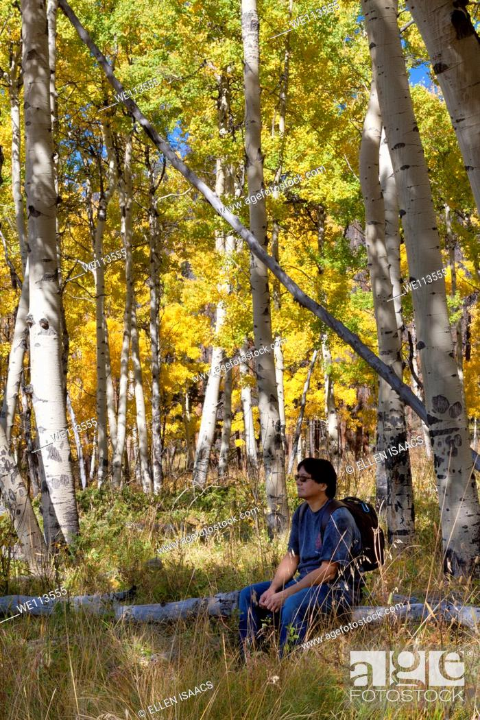 Stock Photo: Asian man sitting on a log enjoying a beautiful grove of aspen trees with yellow leaves in autumn in Colorado.