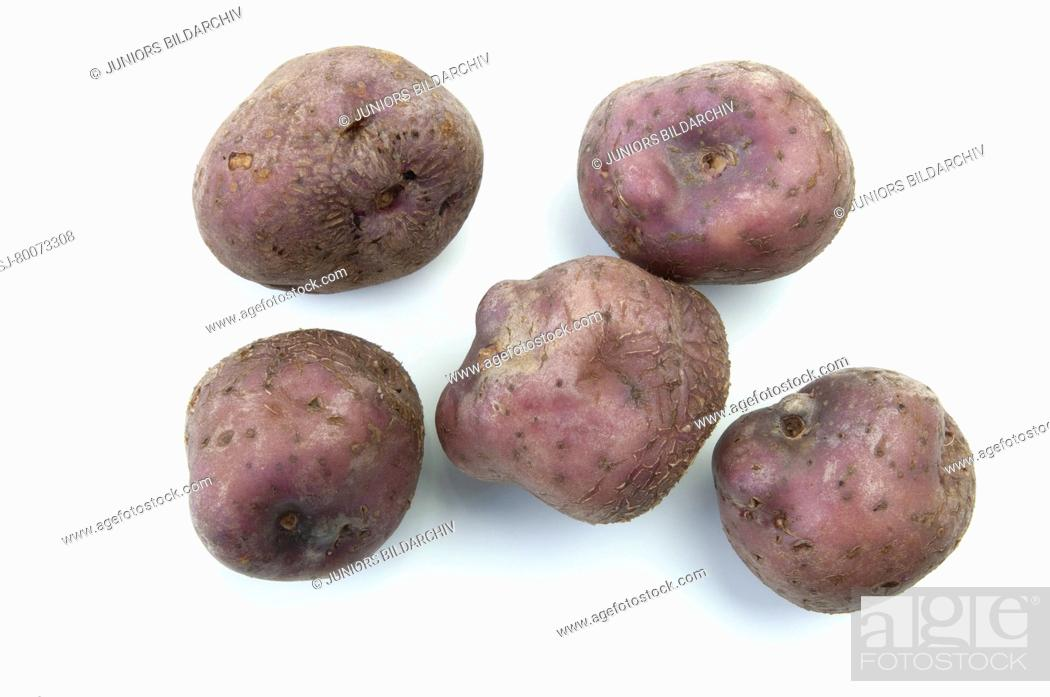 Photo de stock: DEU, 2010: Potato (Solanum tuberosum Skerry Blue). Tubers, studio picture against a white background.