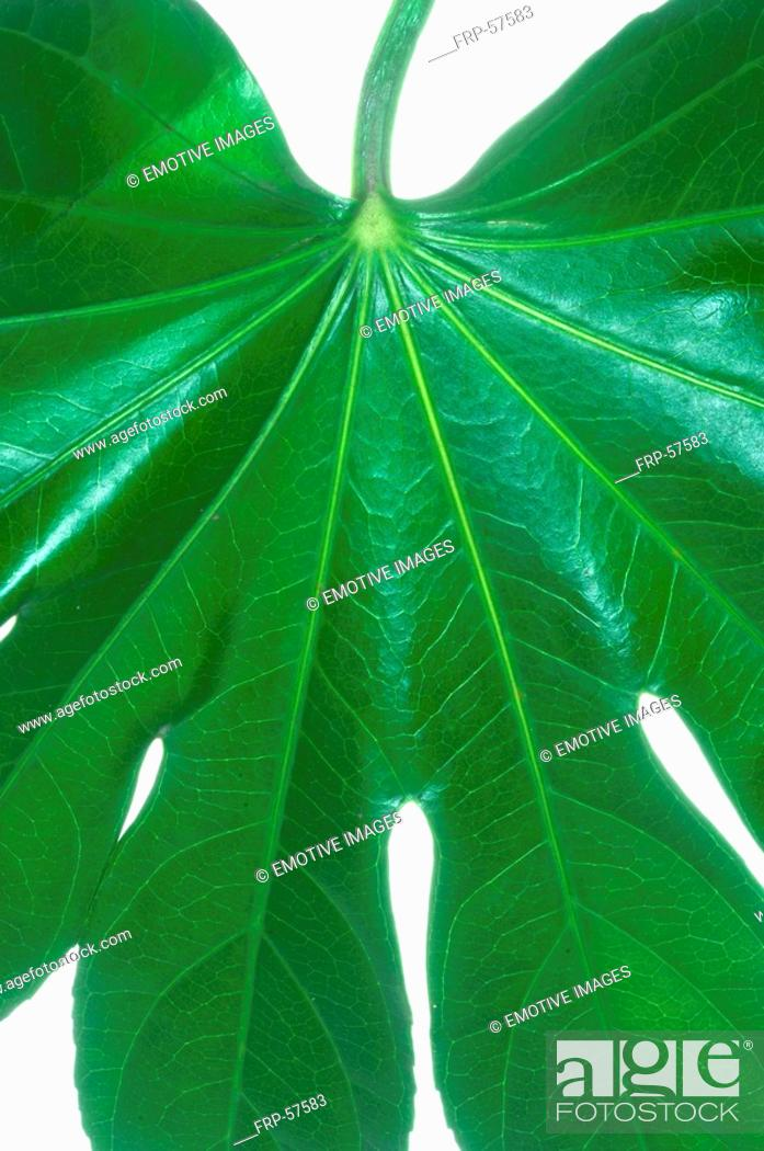 Stock Photo: Leaf, close up.