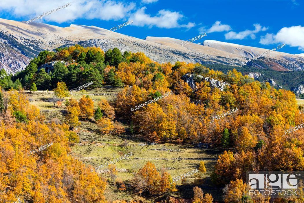 Stock Photo: Cadi-Moixero Natural Park, Vansa i Fornols Valley, Alt Urgell, Lleida, Catalunya, Spain.