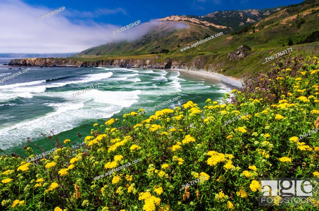 Stock Photo: Wildflowers above Sand Dollar Beach, Los Padres National Forest, Big Sur, California USA.