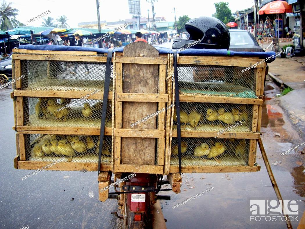 Stock Photo: Ducklings cage on motorbike at Koh Kong market, Cambodia.