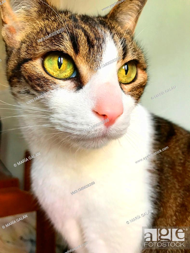 Stock Photo: Tabby and white cat. Close view.
