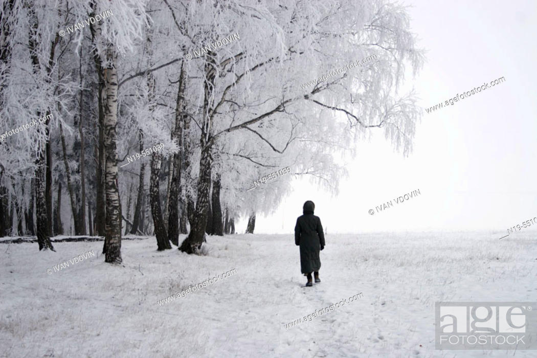 Stock Photo: Trees under snow, Snegiri, Moscow region, Russia.