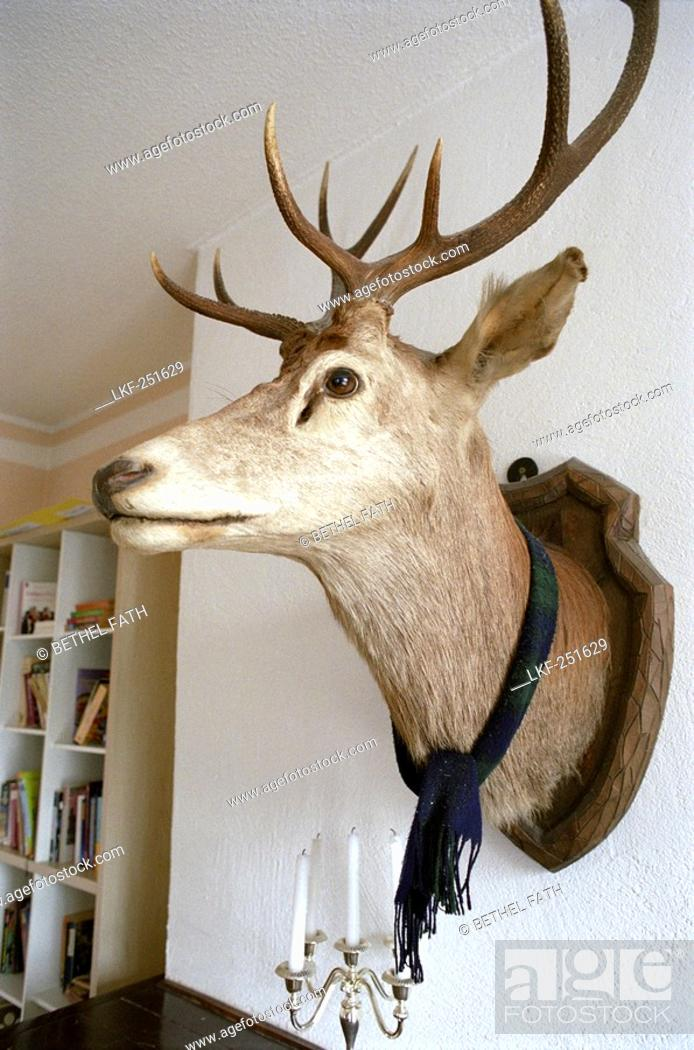 Stuffed Deer Head With Scarf Decoration Living Room Stock
