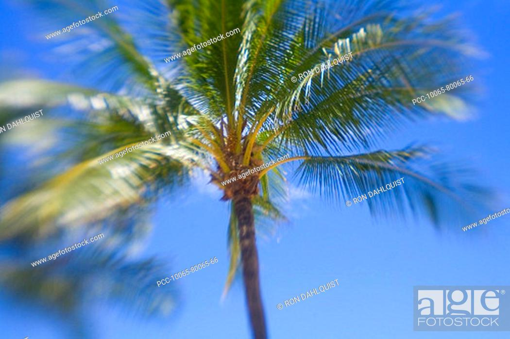 Stock Photo: Hawaii, Palm tree with blur around edges.