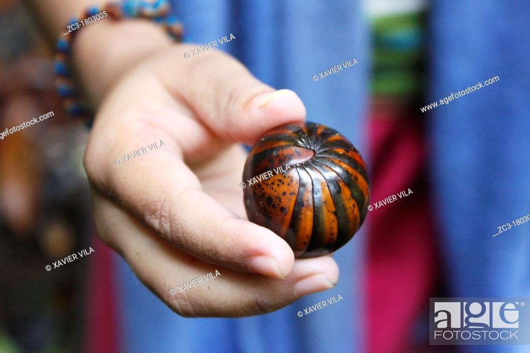 Stock Photo: Gloméris in the hand of a child, Malaysia.