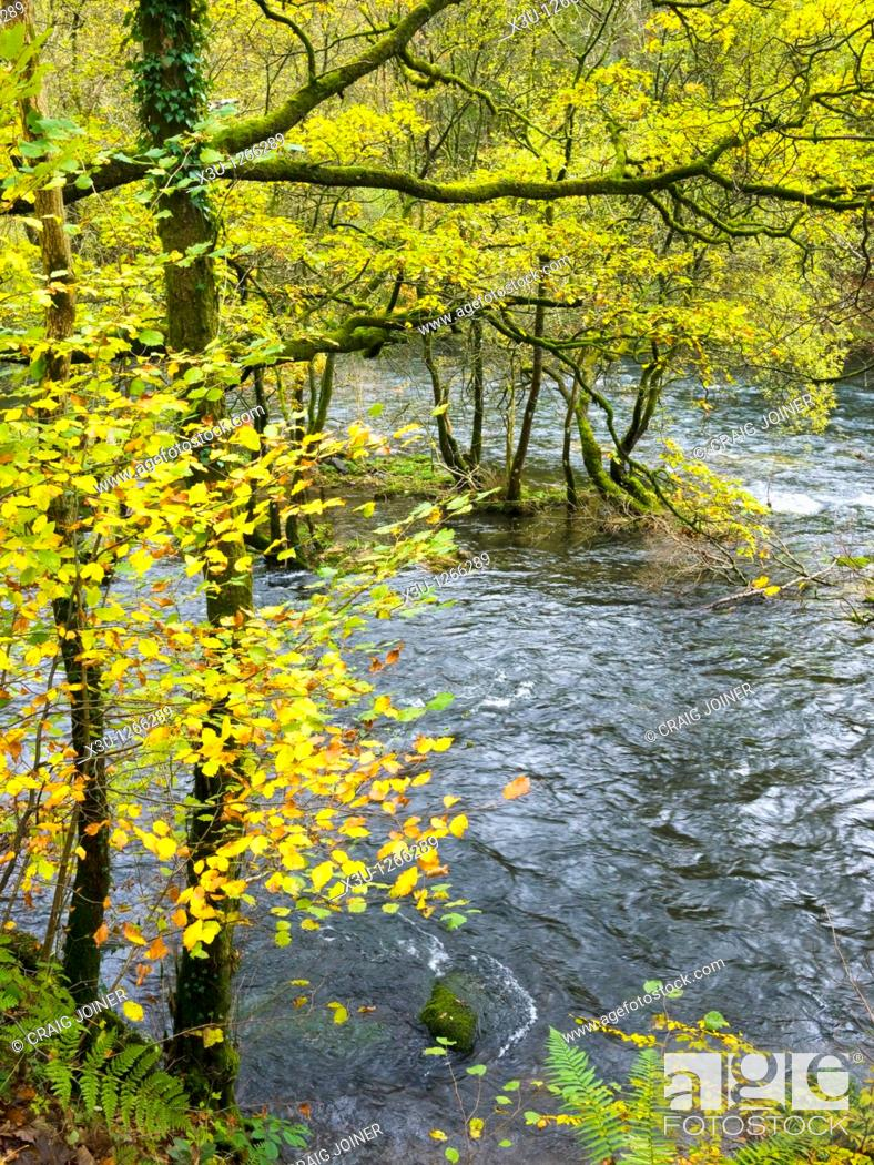 Stock Photo: The River Brathay in woodland at Skelwith Bridge in the Lake District National Park, Cumbria, England, United Kingdom.