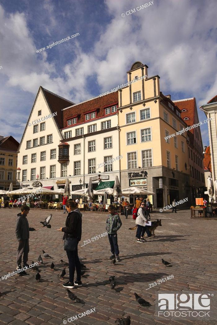 Stock Photo: People feeding birds in front of the colorful houses at the main Square Raekoja Plats, Tallinn, Estonia, Baltic States, Europe.