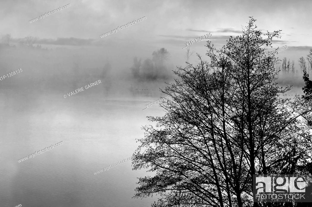 Stock Photo: This nature stock image is a foggy morning on a lake at sunrise with the misty rising up off the water Trees in the foreground add further interest to this.