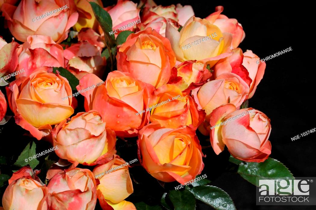 Imagen: roses.