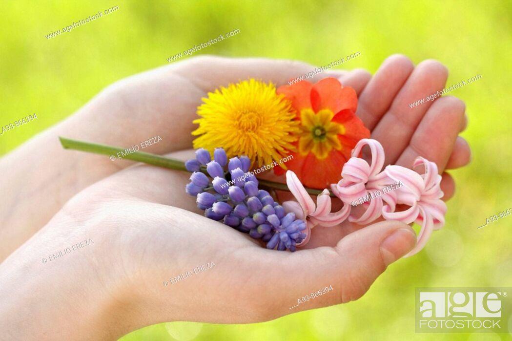 Stock Photo: Springtime flowers.
