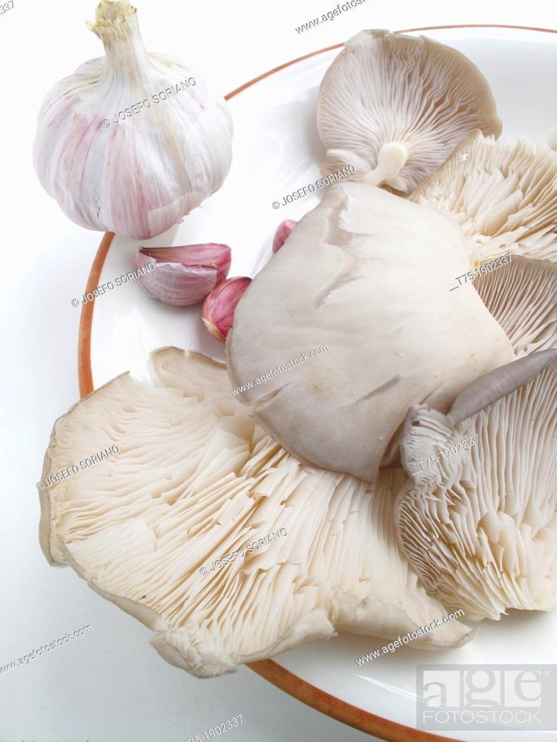 Stock Photo: Pleurotus Ostreatus, mushrooms and garlic.