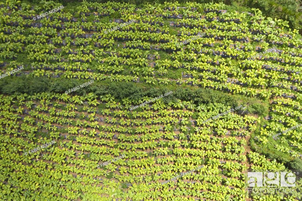 Stock Photo: Aerial view of a tobacco plantation in Yunnan, China.