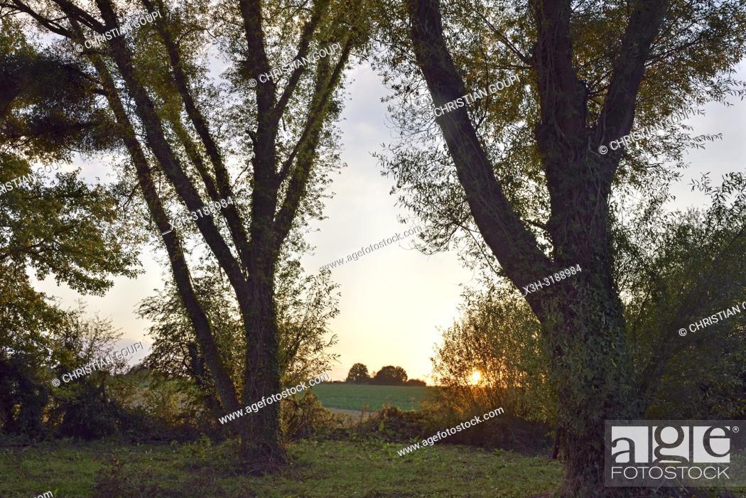 Imagen: departement d'Eure-et-Loir, region Centre-Val de Loire, France, Europe/Eure-et-Loir department, Centre-Val de Loire region, France, Europe.