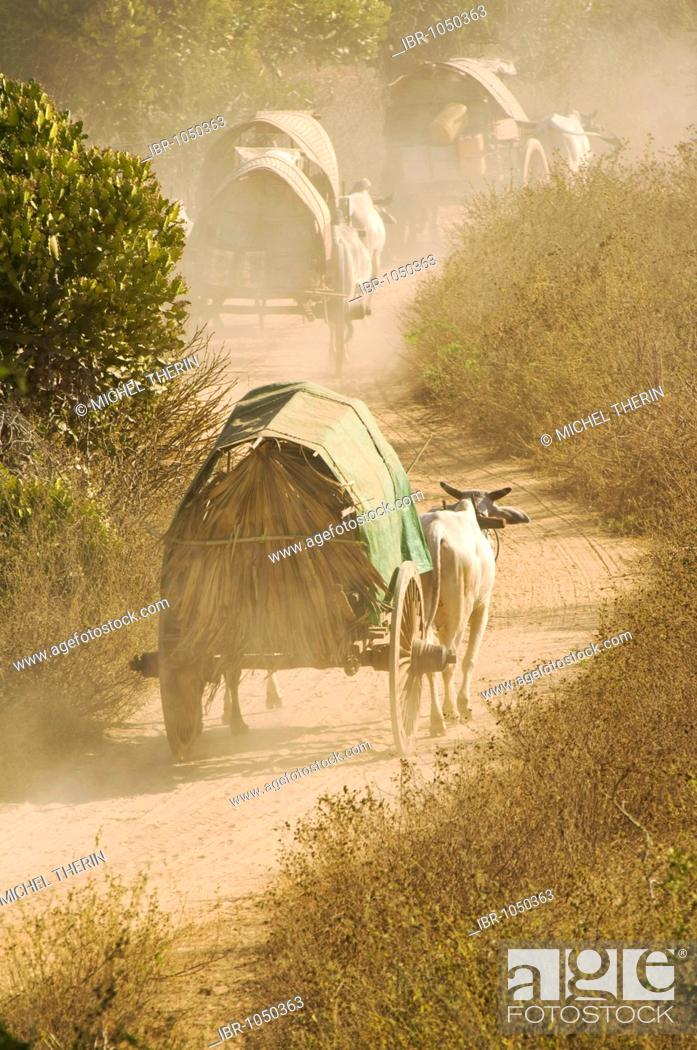 Stock Photo: Ox carriages on a dusty road, Bagan, Burma, Myanmar, Southeast Asia.