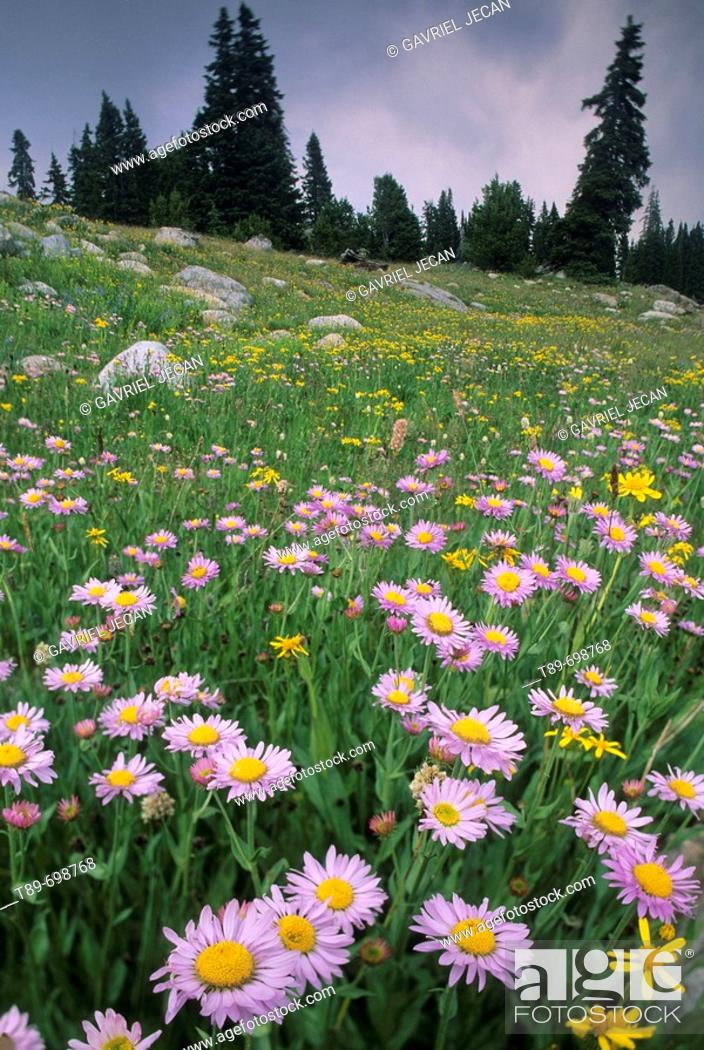 Stock Photo: Wild Flowers.