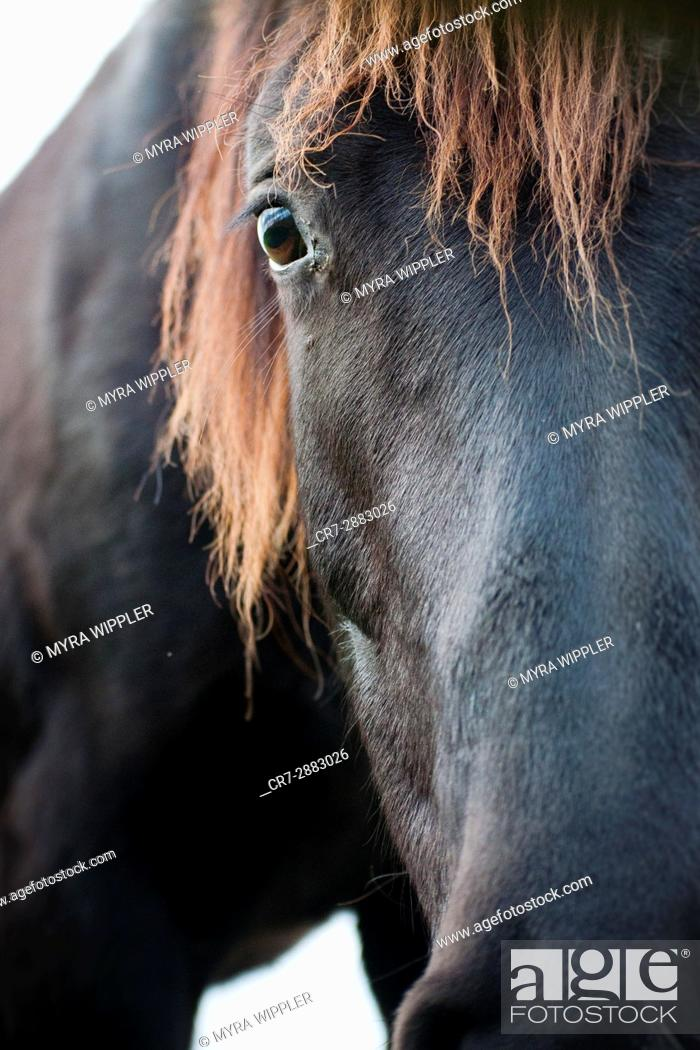 Stock Photo: Black horse in Dutch meadow.