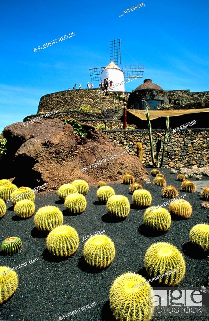 Stock Photo: Spain - Canary Islands - Lanzarote - Cactus Garden.