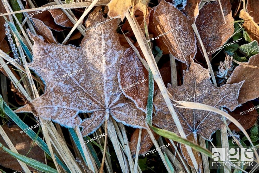 Photo de stock: Fallen leaves forzen on the ground.