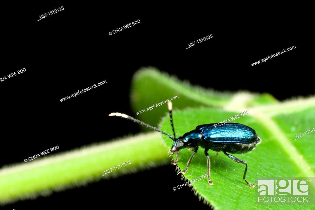 Stock Photo: Beetle.