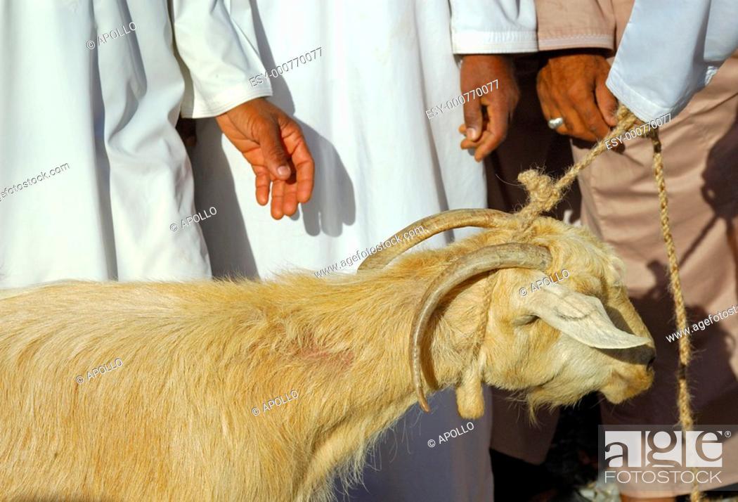 Stock Photo: Ziegenmarkt  Nizwa, Sultanat Oman \ Goat market, Nizwa, Sultanat of Oman.