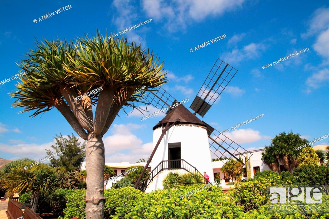 Stock Photo: windmill of Antigua Fuerteventura.