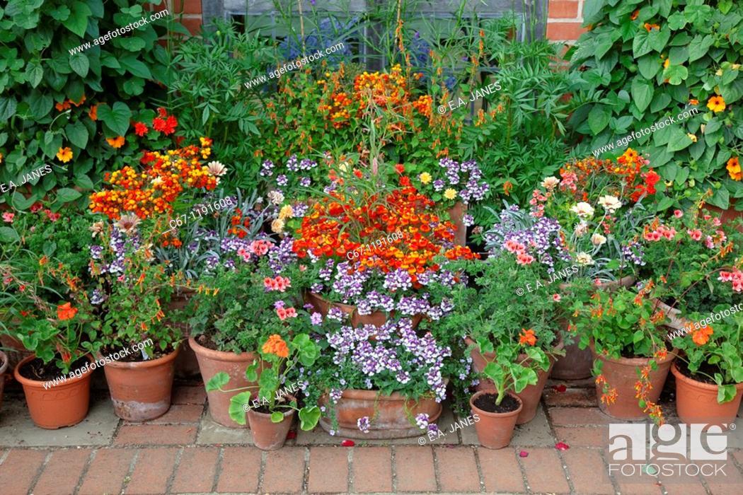 Patio Flower Pot Garden In July