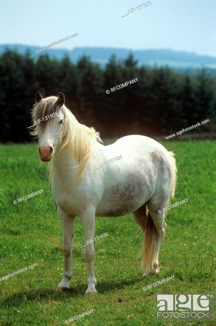 Stock Photo: pony - standing on meadow.