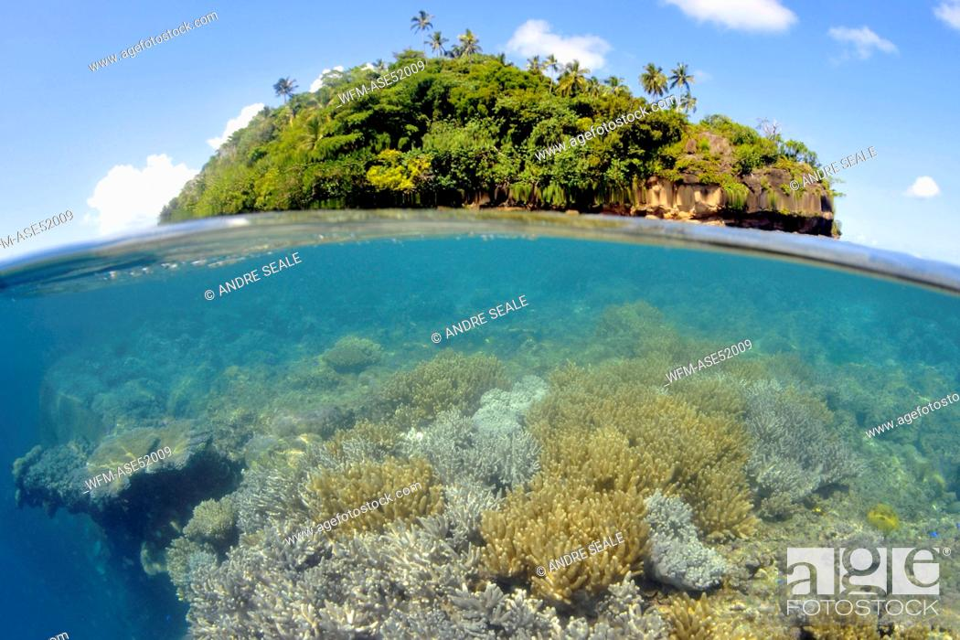 Stock Photo Soft C Reef Sinularia Sp Nukuatea Motu Polynesia Wallis And Futuna Islands