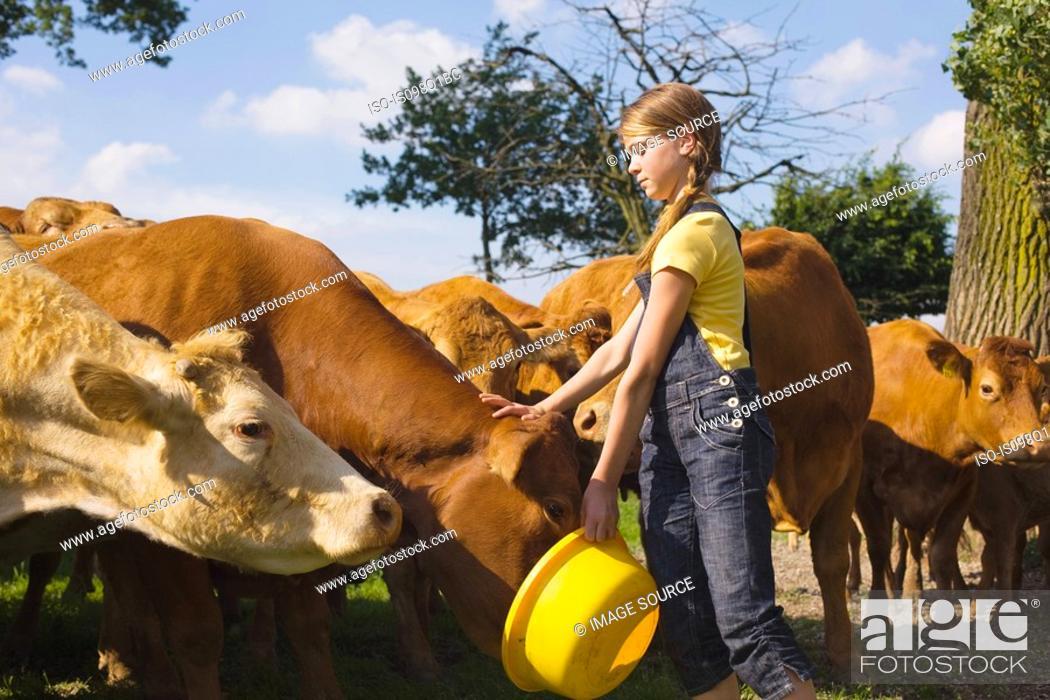 Stock Photo: A teenage girl feeding cows.